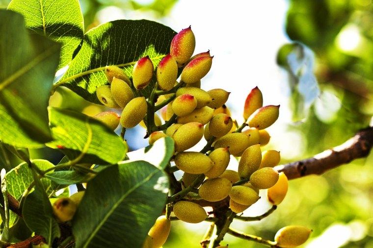 le greffage et la plantation des arbres fruitiers les techniques les plus actuelles