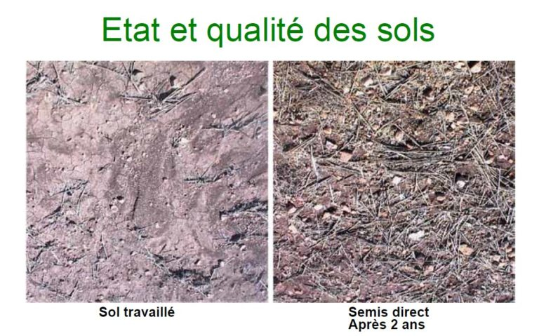 Le semis direct pour une agriculture pluviale de conservation