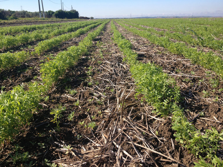 Evaluation of productivity, profitability and farmer's adoption potential of direct seeding of lentils in Zaer region (Morocco)