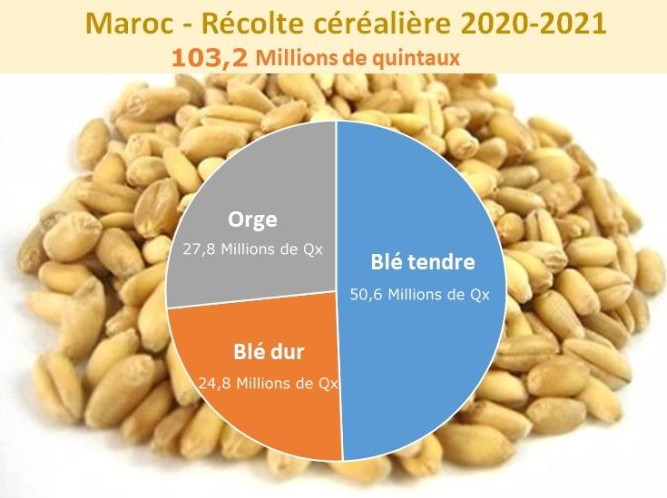 La production céréalière marocaine en 2020-2021: 103,2 millions de quintaux